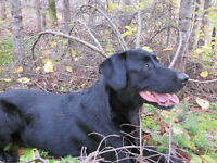 Lost Black Lab, North View area, near Plaster Rock.