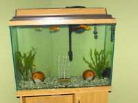 Aquarium, accessories & fish for sale