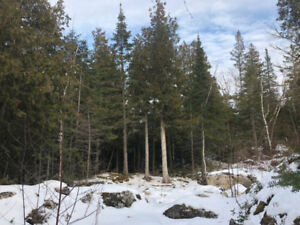 SOLD!! 0.25 AC. Lot - Walk to Tobermory! - By Ashley Barker