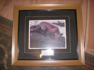 Professional framed picture of Fox