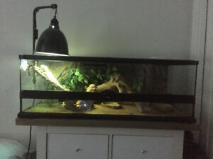 Bearded dragon and complete large tank setup