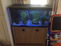 Fluval Roma 200 Fish Tank and cupboard
