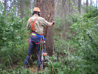 Tree Removal/Pruning/Stumps: FREE QUOTES