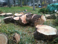 Arborist available for tree pruning and removals