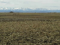 RAW LAND - EXISTING LEASE FOR CROP