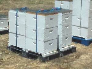 Wanted: Wanting to buy bee hives. Noranda Bayswater Area Preview