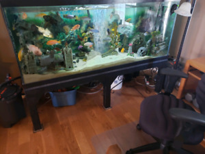 Beautiful fish tank full of fish