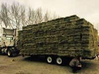 Large and Small Square Hay and Straw Bales