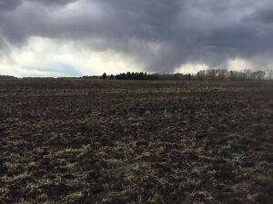 Beautiful Quarter Section of Productive Farm Land (Spruce View)