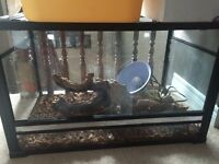 Snake/Lizard tank with everything included!!!