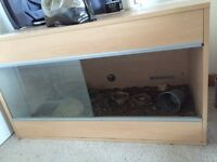 Tortoise and tank for sale