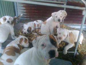 Puppys Forsale