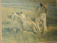 Robert Bateman- Lions At Dawn