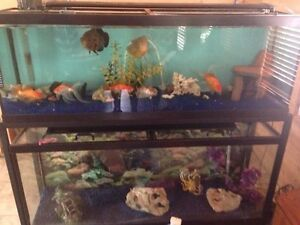 55 gal fish tanks,