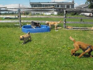 HI DOG SITTER FOR $ 20.00 A DAY Peterborough Peterborough Area image 1