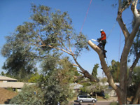 Tree removal, trimming, stump grinding and much more!