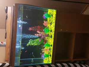 35 gallon fish tank and stand and fish and accessories