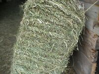 Small square bales of Hay for Sale First Cut
