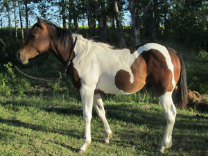 Looking for good homes for our Horses