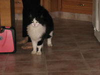 male neutered/great mouser/pet and friend