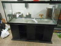 150 gallon tank stand and lid