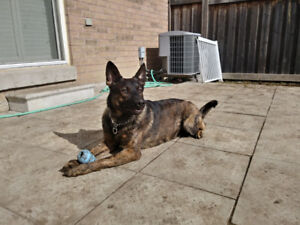 Dog for Rehome