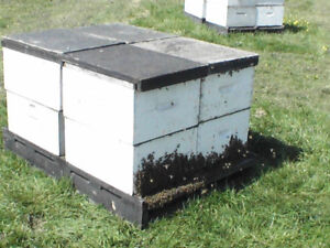 Honey Bee Nucs