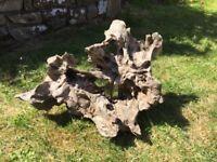 Large very interesting piece of bogwood