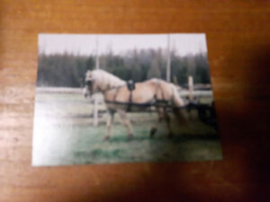 Single driving horse harness