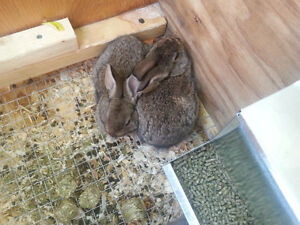 Free Rescued Rabbits