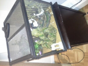 Crested gecko and terrarium for sale
