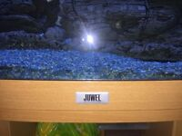 3 ft bow fronted fish tank quick sale