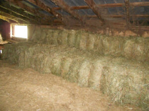 First Cut Grass Hay, squares