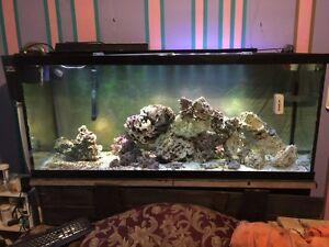 110g saltwater set up