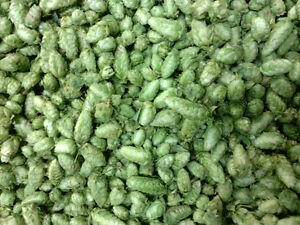 Hops for Sale in BC, Fresh and Pelletized