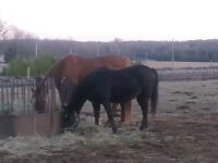Two Bedrooms on Horse Farm