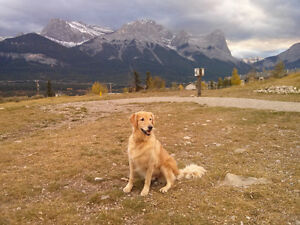 Two big furnished rooms to rent in Canmore home