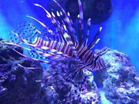 Juwel rio 125 the latest model marine/ tropical cold water fish tank with setup (delivery )