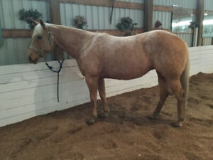4 Horses For Sale