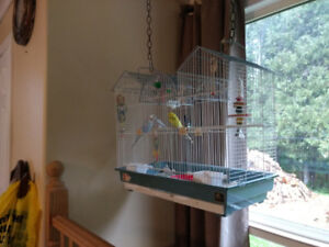 Selling 3 budgies plus cage