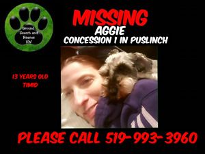 Aggie is missing
