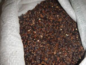 Buckwheat Seeds /  Food Grade