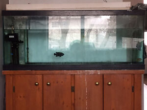 75 Gallon tank and wood stand.  Salt water fish also for sale.