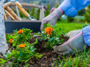 Looking for part time help in spring with gardening, cleaning