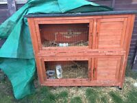 Two boy GuineaPigs and hutch