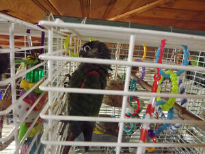 NUTHOUSE AVIARY AND PARROT RESCUE HAS A GC&RC CONURE 4 ADOPTION
