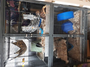 4 rats cage and all accessories