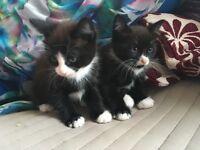 Little kittens for sale