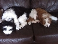 IN-HOME DOGGIE DAYCARE AND OVERNIGHT BOARDING.