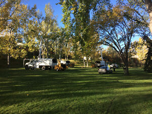 Elm season is in!! Call us today for a FREE quote